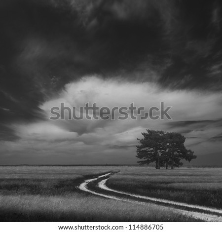 Four lonely trees in field, Ukraine