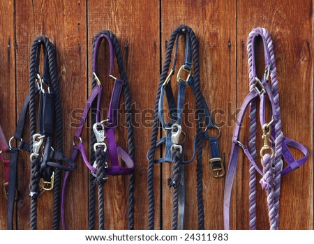 Four nylon bridles hanging against a barn wall