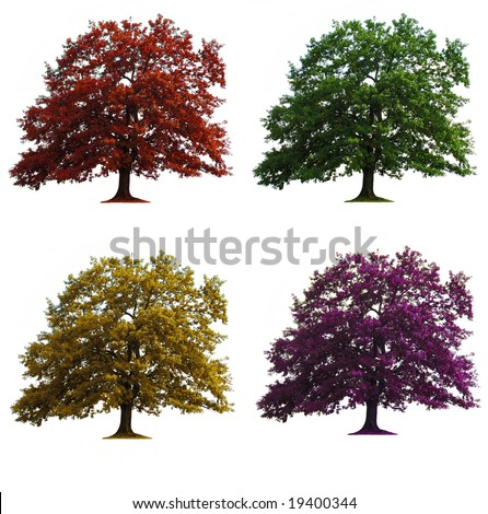 four oak trees in seasons colors isolated over white