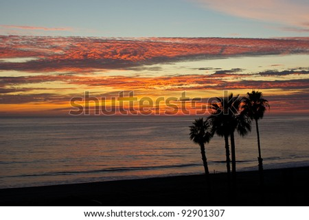 Four palm trees grow from the shore along the Pacific Coast in Malibu, California.