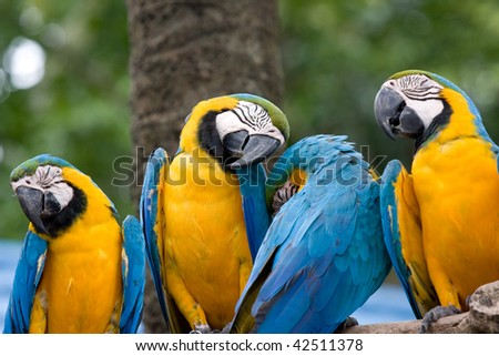 Four parrots stand together and nap, snapped in Bangkok, Thailand