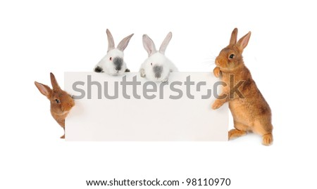 four rabbit  with a white background for text drawing