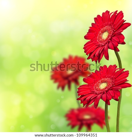 four red gerbera on a green background bokeh - stock photo