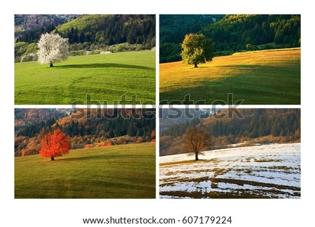 Four season single spring cherry tree on meadow. One year in life of tree. Spring, summer, autumn, winter landscape. #607179224