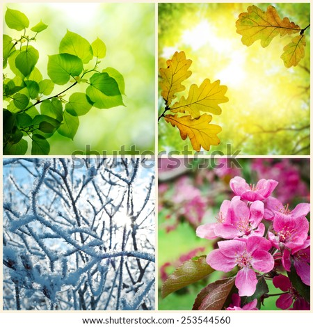 Four seasons. A pictures that shows four different pictures representing the four seasons: Spring, summer, autumn and winter #253544560