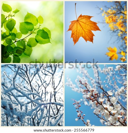 Four seasons. A pictures that shows four different pictures representing the four seasons: Spring, summer, autumn and winter #255566779