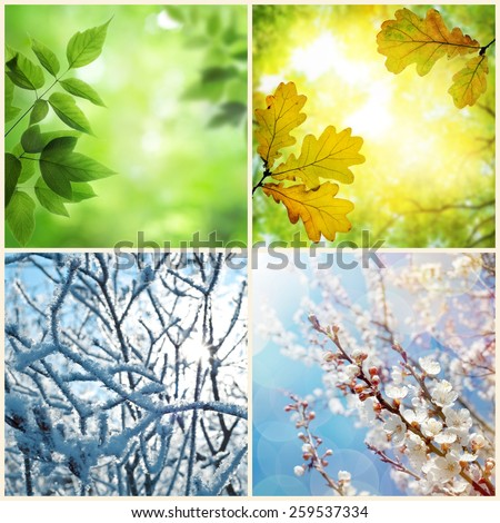 Four seasons. A pictures that shows four different pictures representing the four seasons: Spring, summer, autumn and winter #259537334