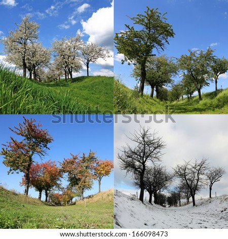 Four Seasons Cherry Trees - square background