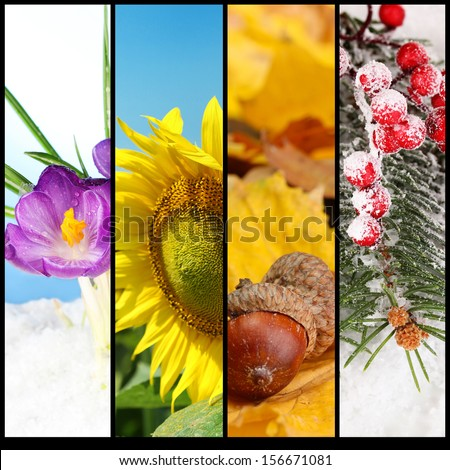Four seasons collage - Shutterstock ID 156671081