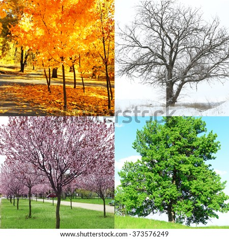 Four seasons collage: several photos of beautiful trees at different time of the year - winter spring, summer, autumn - Shutterstock ID 373576249