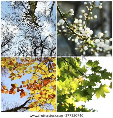 Four seasons collage: several photos of beautiful trees at different time of the year - winter spring, summer, autumn #377320960