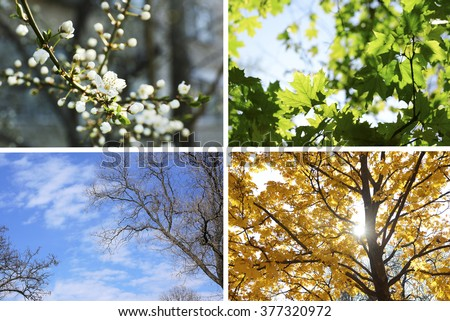Four seasons collage: several photos of beautiful trees at different time of the year - winter spring, summer, autumn #377320972