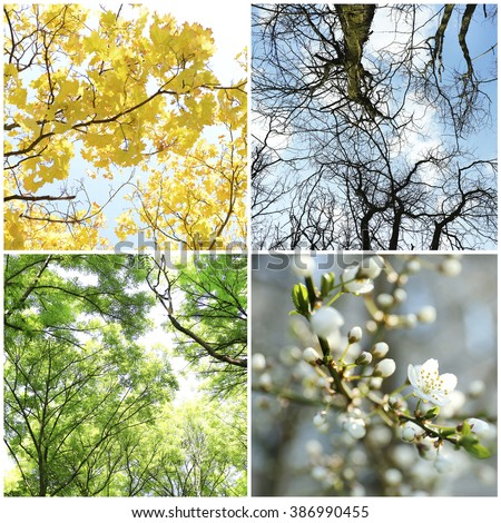 Four seasons collage: several photos of beautiful trees at different time of the year - winter spring, summer, autumn #386990455