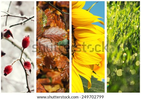 Four seasons collage: Spring, Summer, Autumn, Winter - Shutterstock ID 249702799