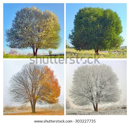 Four seasons for a lonely tree #303227735