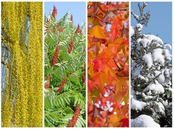 Four seasons in a collage of trees