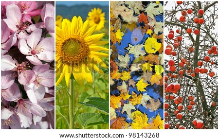 Four seasons. Nature in spring, summer, autumn and winter.