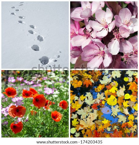 Four seasons. Nature in winter, spring, summer and autumn.