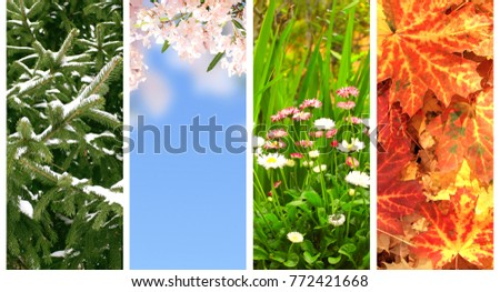 Four seasons of year. Collection of vertical nature banners with winter, spring, summer and autumn scenes #772421668