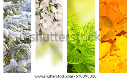 Four seasons of year. Vertical nature banners with winter, spring, summer and autumn scenes #670398310