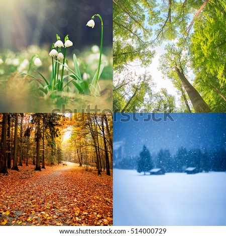 four seasons of year  - winter, spring, summer, autumn #514000729