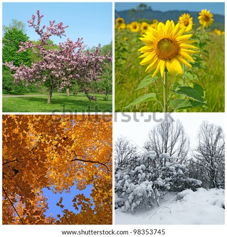 Four seasons. Spring, summer, autumn and winter landscapes.