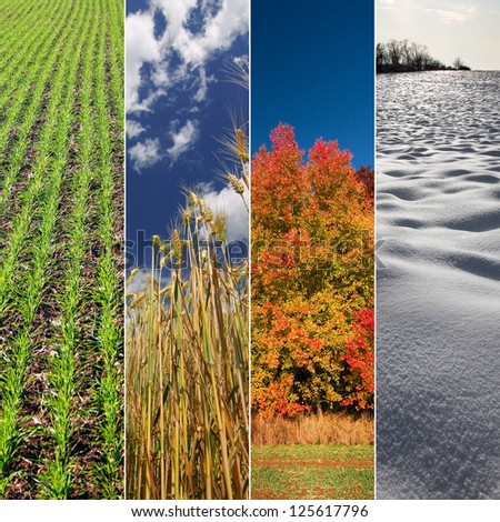 Four seasons: Spring, summer, autumn and winter. Vertical banners.