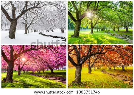 Four seasons with japanese cherry trees in Hurd Park, Dover, New Jersey