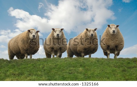 Four sheep on top of the hill