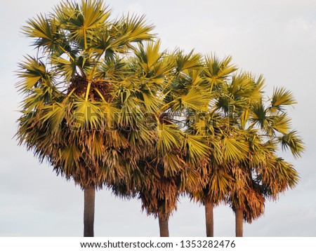 Four tall palm  #1353282476