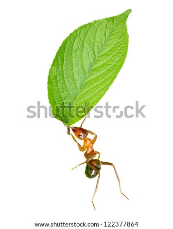 Four the ants carrying leaves.