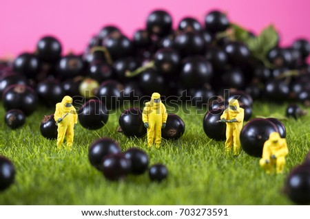 Four toy people in hazmat suits are checking black currant. GMO, chemical or radioactive polluted food concept. #703273591