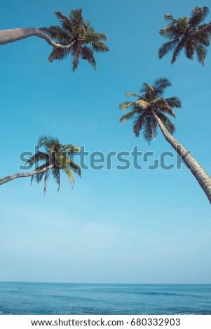 four tropical palm trees...