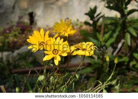 Free photos yellow flower with 4 petals avopix four yellow flowers 1050114185 mightylinksfo