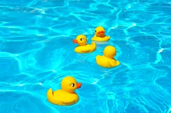 Four yellow squeaky ducky in the pool