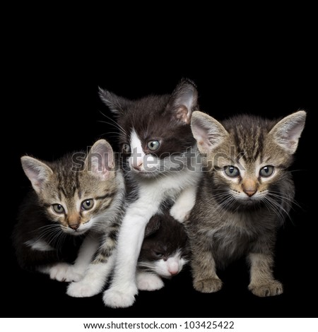 Four Young Kittens Isolated on Black Background
