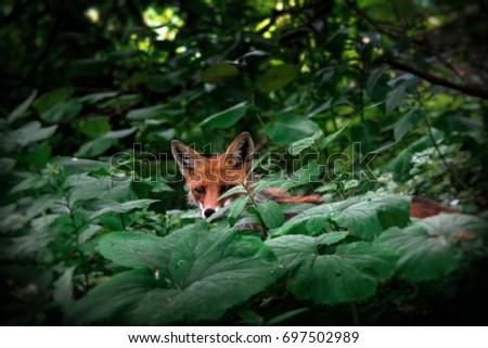 Fox #697502989