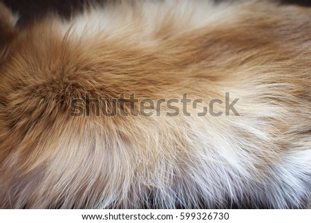 fox fur background #599326730