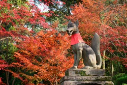 Fox statue and autumn leaves on Novenber at Fushimi Inari Shrine.