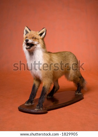 Fox, stuffed animal