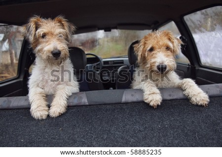 Fox terrier in the car. Mother and daughter.