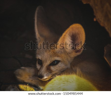 fox that was sleeping just seconds before that picture