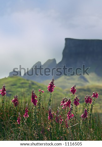 Foxglove flowers, in the background the jagged mountains of the isle of Skye, Scotland