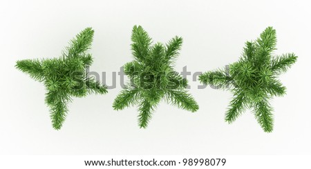 foxtail palm isolated over white