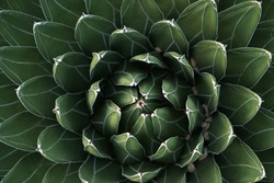 Fractal cactus energy peaceful green