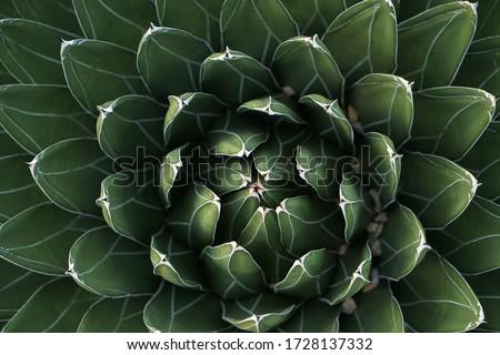 Fractal cactus energy peaceful green Foto stock ©