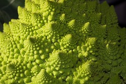Fractal Patterns in a Romanesco Broccoli Plant