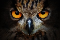 Fractals background owl portrait animal