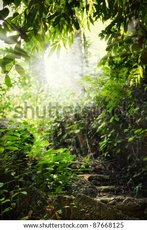 fragment like view of nice summer  forest with sun shine getting through the leafs