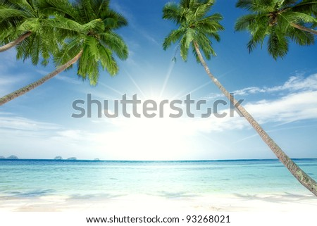 fragment like View of nice tropical  coast with some palm
